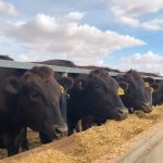 Assistant Feedlot Manager | Finley NSW